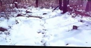 Snow camping in the Southern Appalachians