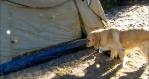 Tips for Taking Your Dog/s Camping