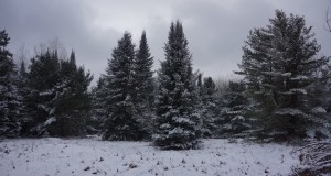 Winter Camping – Pigeon River Country State Forest, MI (January 2015)